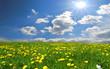 Landschaft Wolken Wiese Sonne