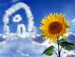 Sonnenblume vor einem Himmel mit Wolkenhaus