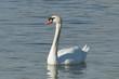 Fototapeten,swans,höckerschwan,entenvögel,märchen
