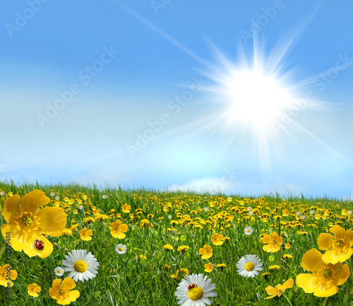 Field full of wild flowers