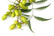 feuille et fruits du neem, plante médicinale