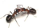 oh, darling. warm greetings of forest ants poster