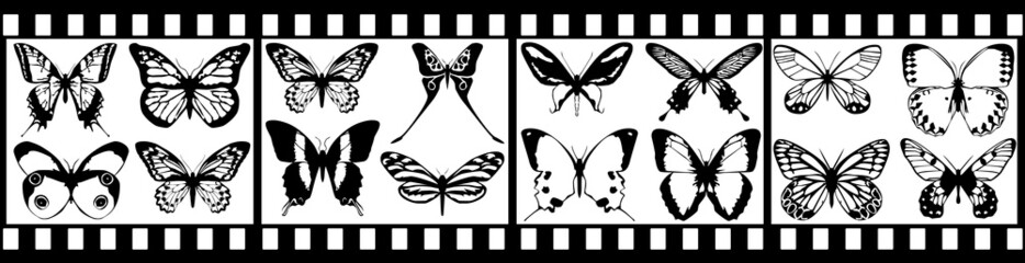 film with black butterfly isolated on white