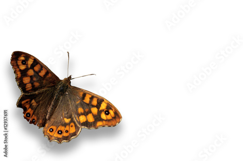Fotobehang Vlinder papillon seul