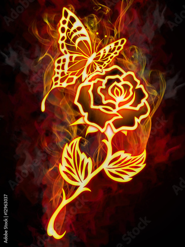 Fire butterfly on a burning rose