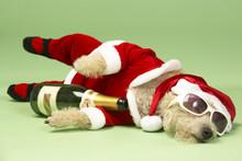 """Постер, картина, фотообои """"Small Dog In Santa Costume Lying Down With Champagne and Shades"""""""