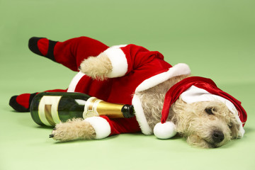 Small Dog In Santa Costume Lying Down With Champagne Bottle