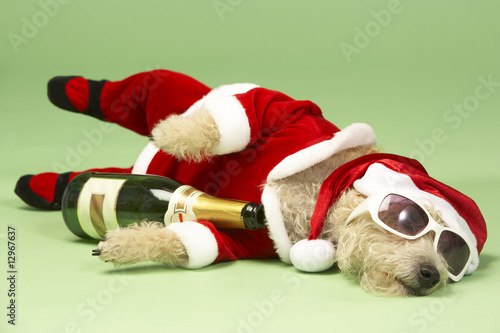 Small Dog In Santa Costume Lying Down With Champagne and Shades