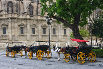 Horses and carts outside of Seville cathedral, Seville, Spain