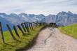Bergwanderweg bei Hafling in Südtirol