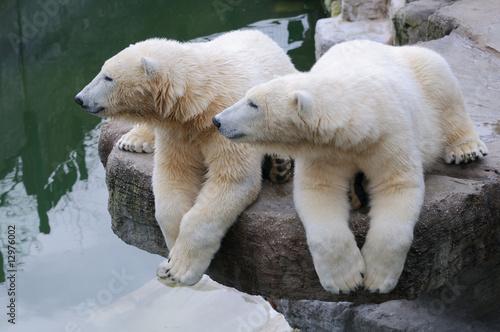 Aluminium Ijsbeer Eisbären synchroner Seitenblick