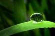 Tropfen auf Bambusblatt