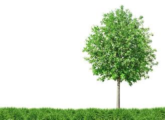 Baum und Wiese