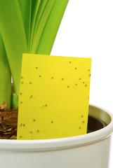 Gelbtafel - yellow insect stick 04