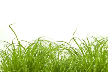 Gras Grass