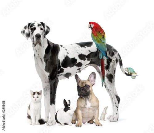 Foto op Aluminium Kameleon Group of pets - Dog,cat, bird, reptile, rabbit