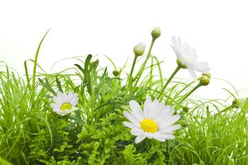Blumen, Flowers