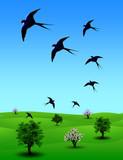 Rondini  Primavera-Spring Swallows-Irondelles  Printemps poster
