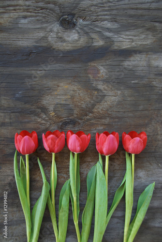 tidy tulips on a old wood background