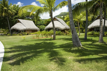 tropic garden with palms and bungalows