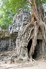Enormous Tree Entwining Ta Som Temple, Cambodia