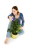 Woman cutting plant with blue scissors poster