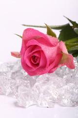 Rose auf Eis