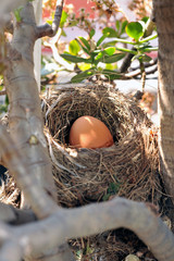 Bird's nest with big egg inside in vertical
