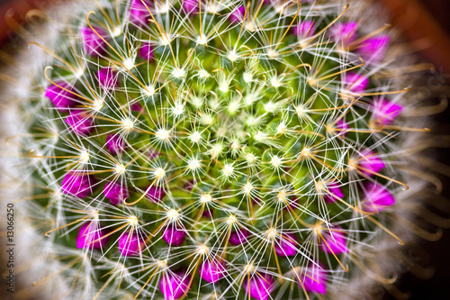 Canvas Cactus cactée