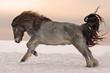 Northern horse from Yakutia