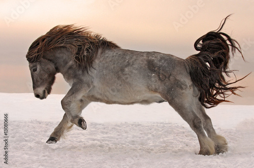 Northern horse from Yakutia