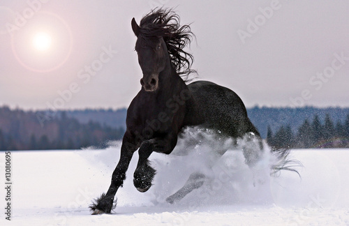 Foto op Canvas Paarden Frisian horse on snow