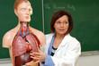 Cours d'anatomie - le poumon 2