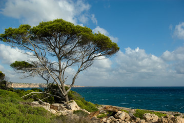 A tree over the sea