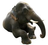 slon příspěvek