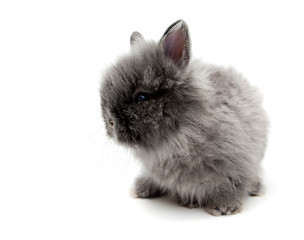 little Angora bunny #2