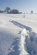 Orme sulla neve 2