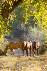 Horses graze along an old path.