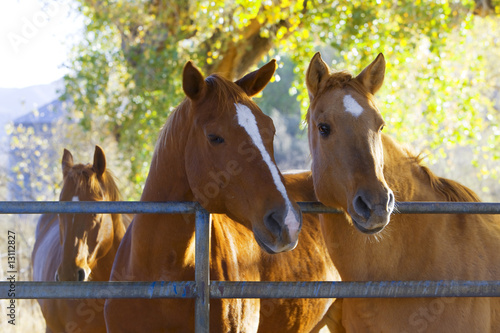 Foto op Canvas Paarden Horses in the pasture on a ranch