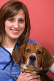 Veterinarian With a Beagle poster