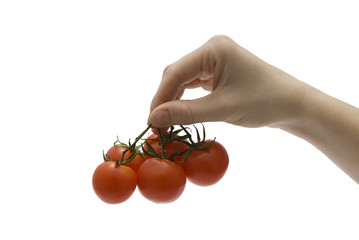 Female hand with tomatoes
