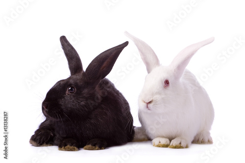 Black rabbit and white rabbit isolated on white background.