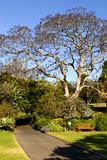 Royal Botanic Garden in Sydney poster