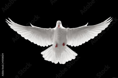 flying dove - 13158024