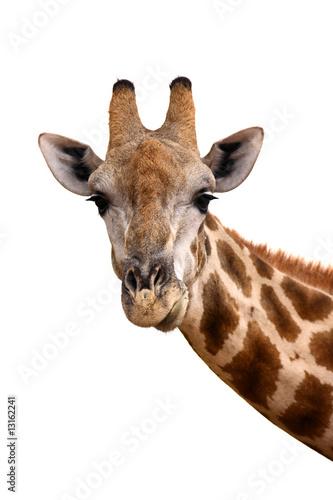 Fotobehang Giraffe Giraffe portrait