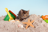 Kitty on a beach-