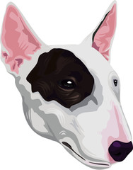 American Staffordshire terrie dog