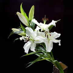 branch of white lilies on black