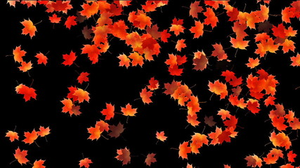 Maple leafs falling background, Alpha Channel