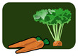 Vector color illustration of a carrot.